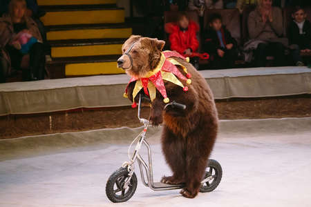 Circus brown bear on speech on the arena