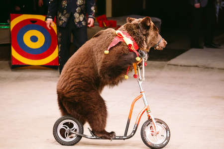 Circus brown bear on speech on the arena.