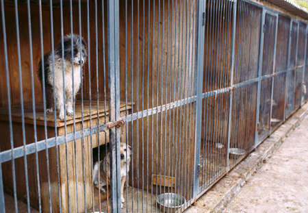 Shelter for stray dogs. Street dogs in cages.