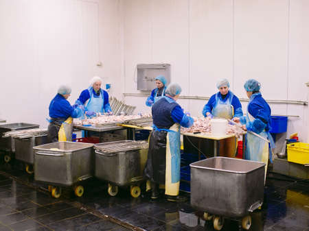Workers working in a chicken meat plant 版權商用圖片
