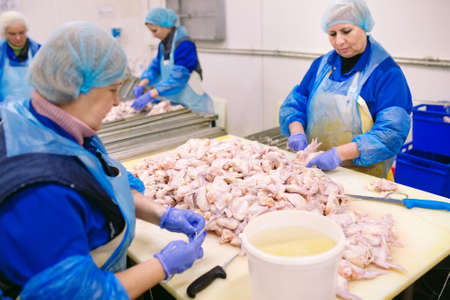 Workers working in a chicken meat plant
