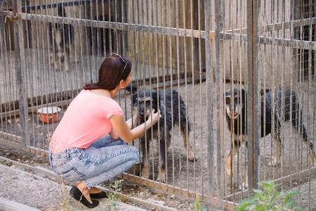 Girl volunteer in the nursery for dogs. Shelter for stray dogs. Imagens