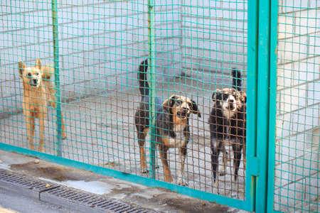 Refugio al aire libre para perros callejeros sin hogar.