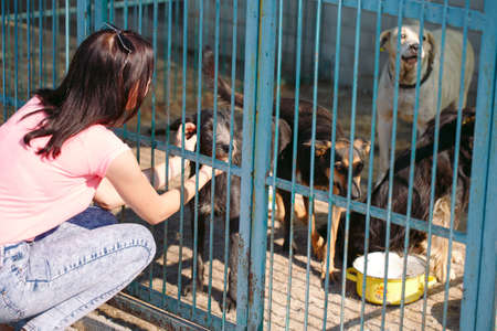 Girl volunteer in the nursery for dogs. Shelter for stray dogs