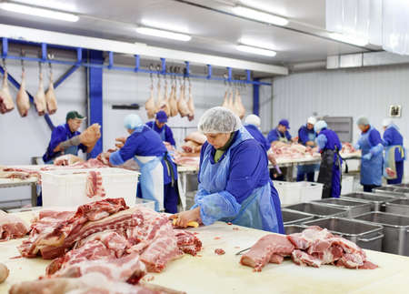 Cutting meat in slaughterhouse. Butcher cutting pork at the meat manufacturing.