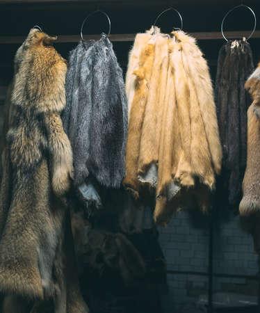 Tierisches Fell. Füchse, Waschbären, Wölfe, Biber, Nerze, Nutria hängen nach der Verarbeitung.