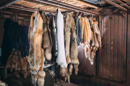 Animal fur. foxes, raccoon, wolf, beaver, mink, nutria hanging after processing