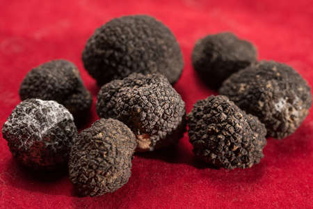 Black truffles isolated on a red background.