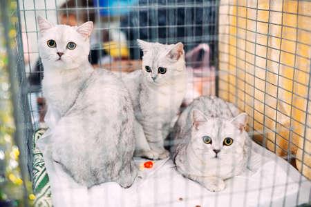 Exhibition or fair cats