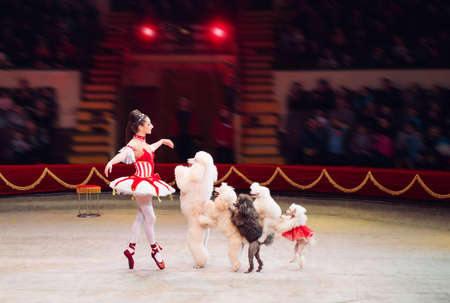 Funny Dogs Performance in the Circus ring.