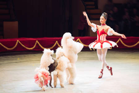 the Dogs Performance in the Circus arena. Stock Photo