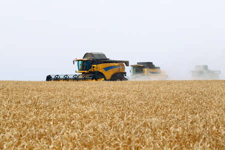 Combine harvester harvests ripe wheat. Agriculture. Wheat fields. Banco de Imagens