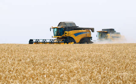 Combine harvester harvests ripe wheat. Agriculture. Wheat fields. Imagens