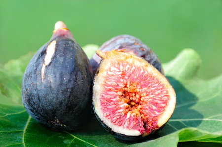 Three Figs on fig leaf in the field