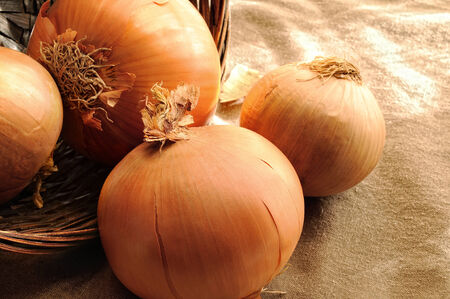 close up of onions in a basket: onions out of a wicker basket on a table cloth tablecloth brown close up Stock Photo