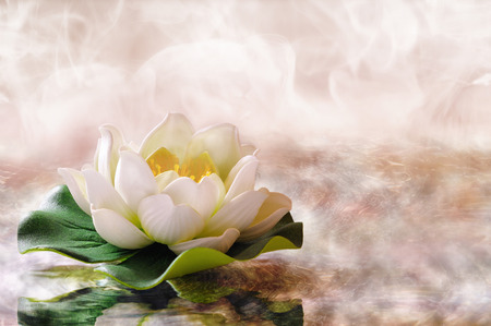 soul: Water lily floating in warm water. Spa, relaxation, meditation and health concept. Horizontal composition. Stock Photo