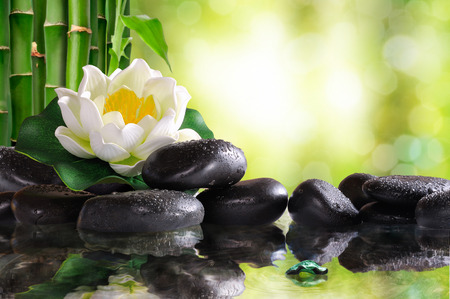 Water lily on lots of black stones reflected in water in nature. With bamboo and green background bokeh. Concept of calm and relaxation. Alternative treatments, massage, balance and meditation. Horizontal composition.