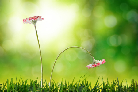 positivism: Comparison emotional and social exclusion concept. With two flowers, upright and listless on nature background. Horizontal composition. Front view