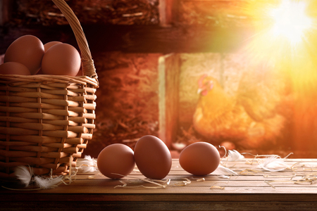 Freshly picked eggs in wicker basket on wooden table and background inside a chicken coop with backlit sun. Front view. Horizontal composition. Imagens