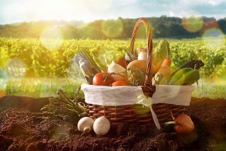 Assortment of vegetables in a wicker basket on soil with crop landscape background. Horizontal composition. Front view