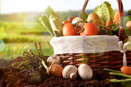 Assortment of vegetables in a wicker basket on soil with crop landscape background close up. Horizontal composition. Front view Stock Photo