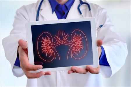 병원에서 태블릿에 신장의 그림을 보여주는 의사의 의사 근접 스톡 콘텐츠
