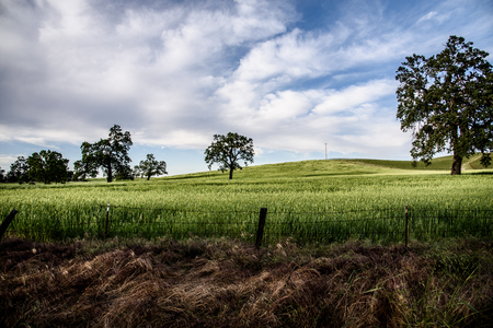 A field in Templeton, California with oak trees.