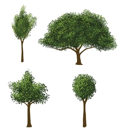 foglie di quercia: Vector Alberi Set