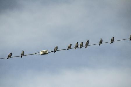Bird Stock fotó