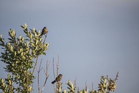Bird Reklamní fotografie