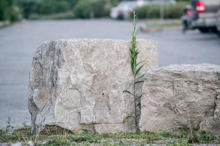 Rock Reklamní fotografie