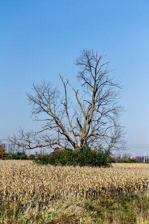 Drzewo Zdjęcie Seryjne