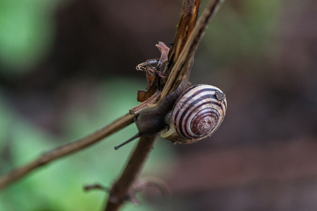Snail Reklamní fotografie - 28468965