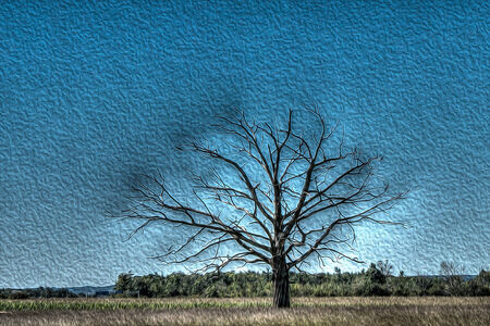 spacial: Tree with spacial effect  Stock Photo