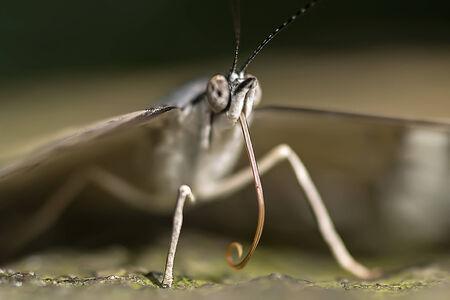 arthropod: Butterfly