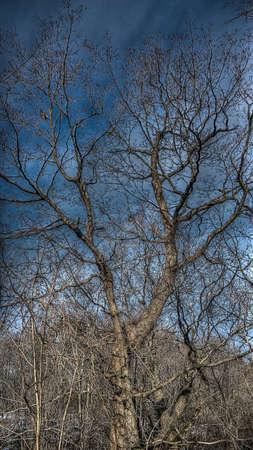 suburbia: Tree