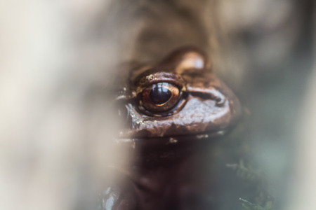 cold blooded: Frog Stock Photo