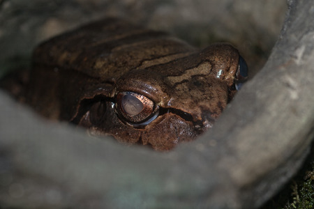 blooded: Frog Stock Photo