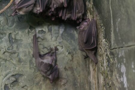 echolocation: Bat
