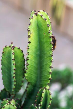 Cactus 版權商用圖片