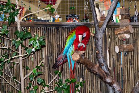 guacamayo: Guacamayo Foto de archivo