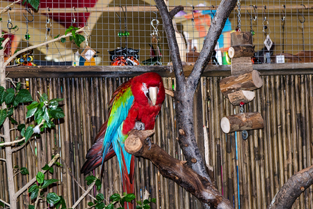 macaw: Macaw