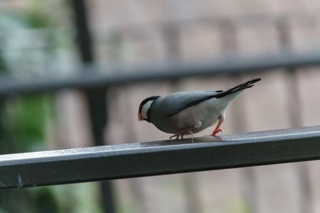 talon: Sparrow