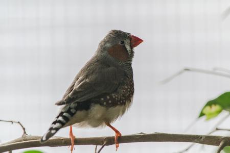 finch: Finch Stock Photo