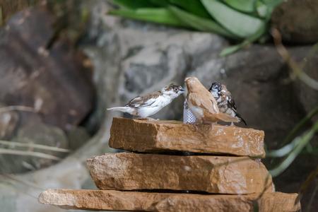 talon: Birds