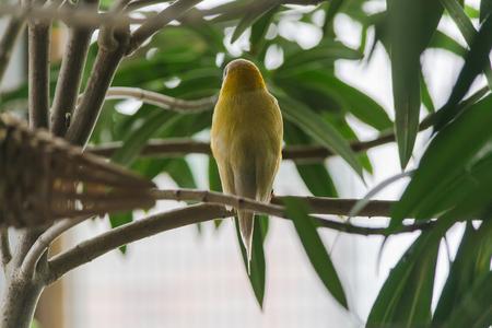 talon: Bird Stock Photo