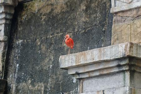 ibis: ibis