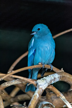 Bird 写真素材