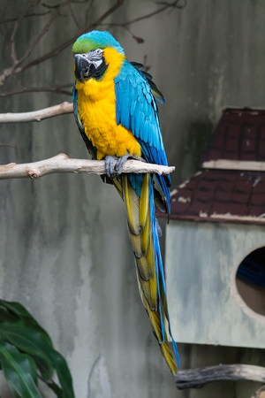 Blue and Gold Macaw 스톡 콘텐츠