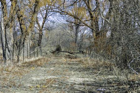 decrepit: Nature path Stock Photo